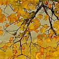 Maples In Autumn Print by Carolyn Doe