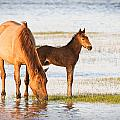 Mare and Foal Poster by Bob Decker