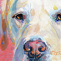Martha's Pink Nose Poster by Kimberly Santini