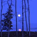 May Moon through Birches Poster by Francine Frank