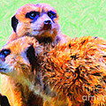 Meerkats . 7D4176 Poster by Wingsdomain Art and Photography