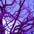 Moon Tree purple Print by First Star Art