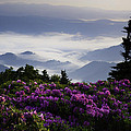 Morning on Grassy Ridge Bald Poster by Rob Travis