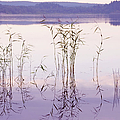 Morning Zen. Pearly Moments of Sunrise. Ladoga Lake. Northern Russia Poster by Jenny Rainbow