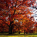 Morton Arboretum in colorful fall Print by Paul Ge