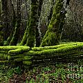 Mossy fence 3 Poster by Bob Christopher