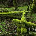 Mossy Fence 4 Poster by Bob Christopher