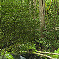 Mountain Stream Panorama Poster by Andrew Soundarajan