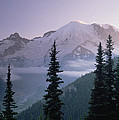 Mt Rainier As Seen At Sunrise Mt Poster by Tim Fitzharris