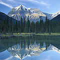 Mt Robson Highest Peak In The Canadian Print by Tim Fitzharris