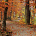 Munich Foliage Poster by frenzypic by chris hoefer