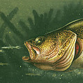 Murky Water Walleye Poster by JQ Licensing