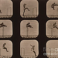 Muybridge Locomotion of Man Jumping Print by Photo Researchers