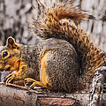 My Nut Print by Robert Bales