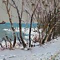 Naked Trees by the Lake Shore Print by Ylli Haruni