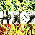 Nature Scape 007 Poster by Robert Glover