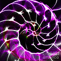 Nautilus Shell Ying and Yang - Electric - v1 - Violet Print by Wingsdomain Art and Photography