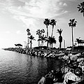 Newport Beach Jetty Print by Paul Velgos