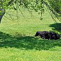 Noon Siesta Print by Jan Amiss Photography