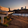 Nubble Seat Print by Emily Stauring