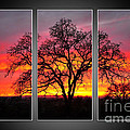 Oak Silhouette Tryptych 1 Print by Cheryl Young