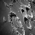 Oblique View Of The Lunar Surface Poster by Stocktrek Images