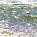Ocean Seagulls Print by Cindy Wright