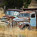 Old Farm Trucks Poster by Steve McKinzie