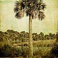 Old Florida Palm Print by Rich Leighton