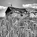 Old Shack on the Prairie in Black and White Poster by Garry Staranchuk