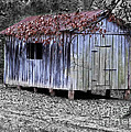 Old Weathered Shed Poster by Betty LaRue