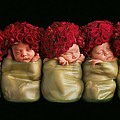 Olivia, Alice, Hugo, Imogin-Rose & Mya as Roses Print by Anne Geddes