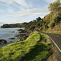 On The Road Around The Coromandel Poster by Dawn Kish