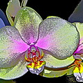 Orchid 2 Print by Pamela Cooper