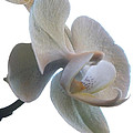 Orchids 1 Poster by Mike McGlothlen