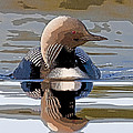 Pacific Loon Making Waves- Abstract Poster by Tim Grams