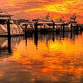 Palm Beach Harbor Glow Print by Debra and Dave Vanderlaan