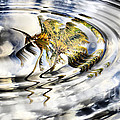 Palm Reflections Print by Cheryl Young