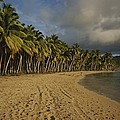 Palm Trees Line A Dominican Republic Print by Raul Touzon