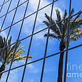 Palm Trees Reflection on Glass Office Building Poster by Paul Velgos
