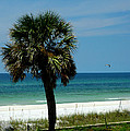 Palmetto and the Beach Poster by Susanne Van Hulst