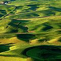 Palouse Contours Print by Mike  Dawson