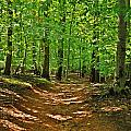 Path In The Woods - Holmdel Park Print by Angie Tirado