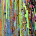 Peeling Bark- St Lucia. Print by Chester Williams