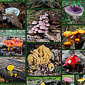 Pennsylvania Mushrooms Collage 2 Poster by Mother Nature