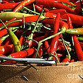 Peppers And More Peppers Poster by Susan Herber