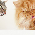 Persian Cat And Tabby Cat Poster by Hulya Ozkok