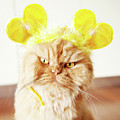 Persian Cat With Hair Costume Poster by Hulya Ozkok