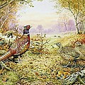 Pheasants in Woodland Poster by Carl Donner