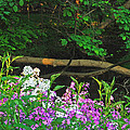Phlox Along The Creek 7185 Poster by Michael Peychich